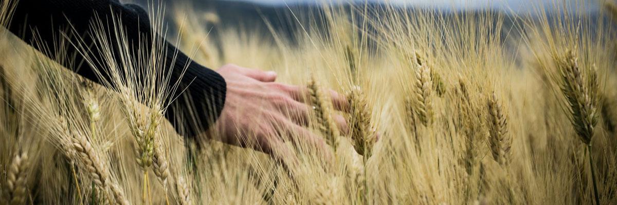 Réduire l'intensité de gestion en céréales, c'est possible!