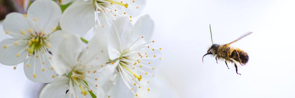 Pollinisation des cultures